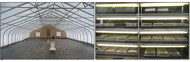 greenhouse and germination chamber